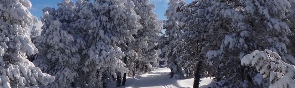 piste de ski de fond Font-Romeu